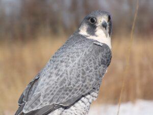 Birding Breaks